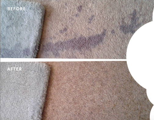 """Superior clean provided an outstanding service, not only were they professional and polite, but made my dirty and stained carpets look brand new. Thanks again"""